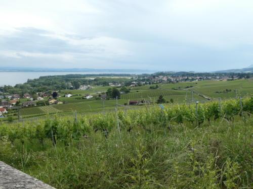 Vue sur le village de Colombier depuis le Domaine des Lerins.