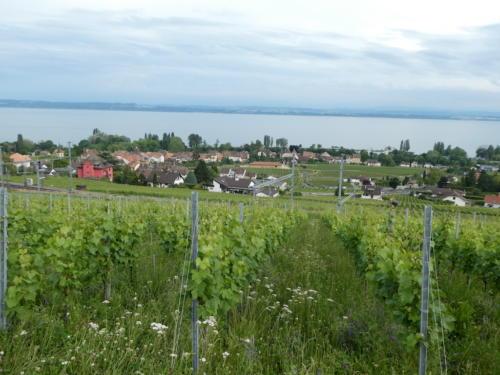 Vue sur le village d'Auvernier depuis le Domaine des Lerins.